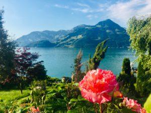 Eine kräftig leuchtende pinke Blüte vor einem tiefblauen See und Bergen.
