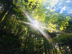 Sonnenstrahlen fallen durch das Blätterdach des Waldes.
