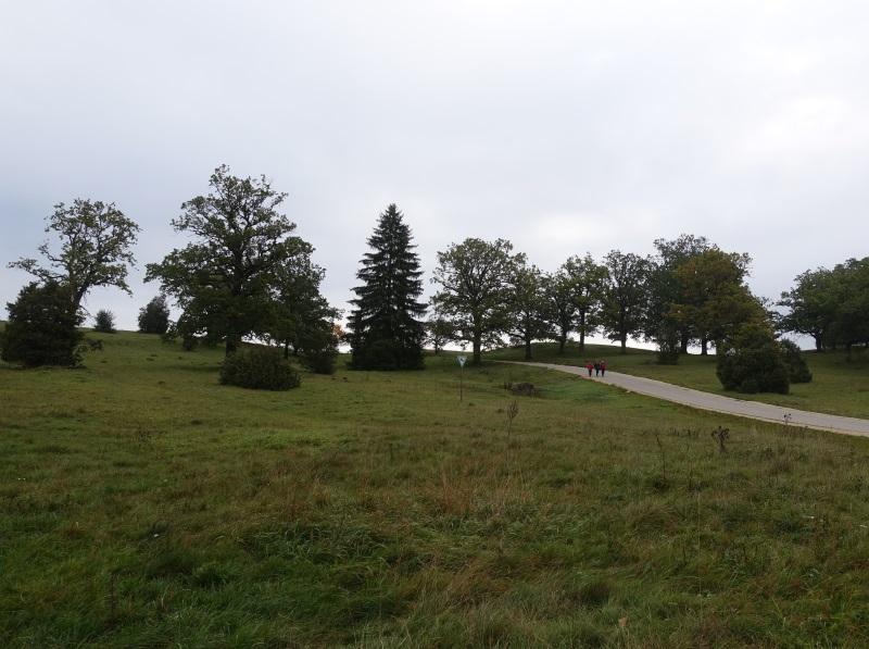 Typische Wiesenlandschaft mit vereinzelten Bäumen