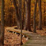 Ein Holzweg führt durch einen Herbstwald.