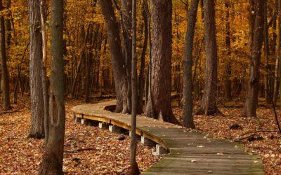 22.-25.10.2020 | Herbstwandertour 2020 – auf dem Gäurandweg von Mühlacker nach Horb am Neckar, vom Heckengäu bis in den Schwarzwald