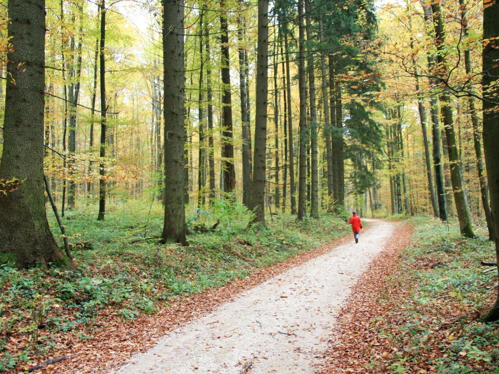 Ein Weg durch den Wald.