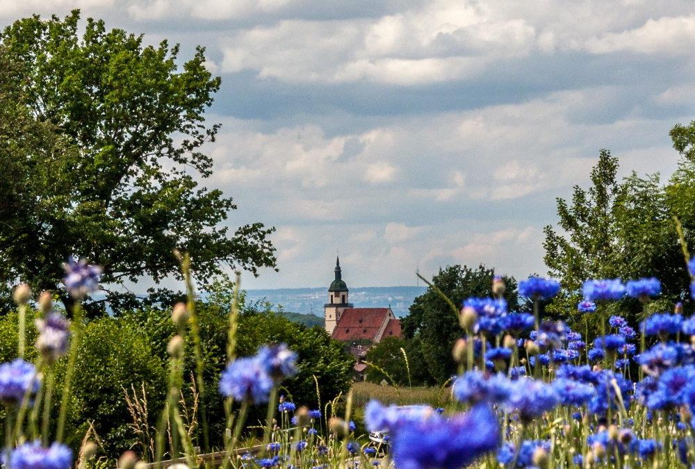 23.08.2020 | Sommerwanderung: Weilheim an der Teck – Unterwegs im Biospährenreservat Schwäbische Alb