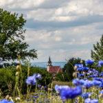 Bläuliche Blumen im Vordergrund, dahinter Bäume und ein schöner Kirchturm.